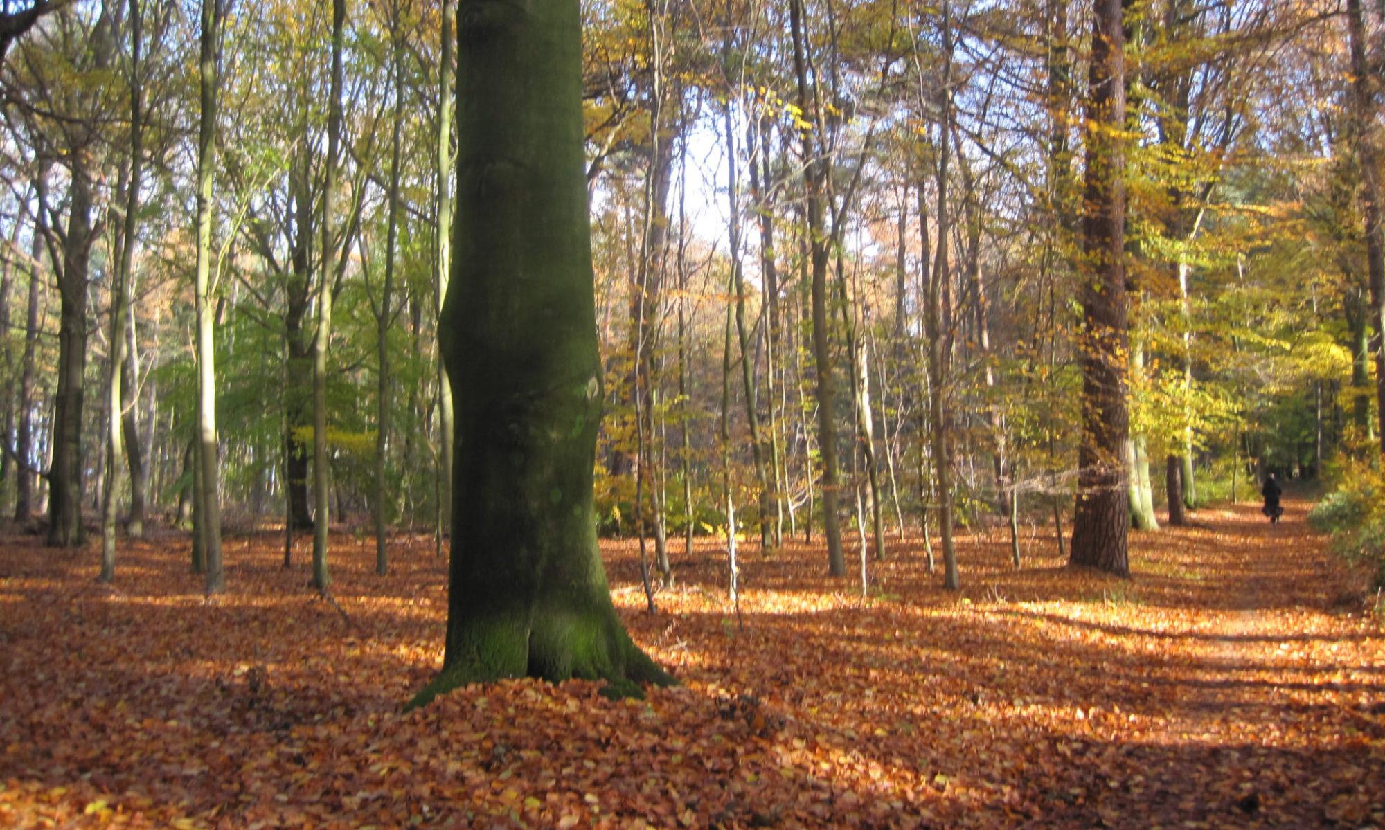 Stichting Vrienden Van Het Wehlse Bos En Landschap